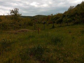 Arad Minis, teren intravilan de vanzare de la agentie imobiliara
