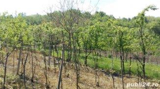 vanzare 1800 metri patrati teren intravilan, zona Stefanestii Noi, localitatea Stefanesti