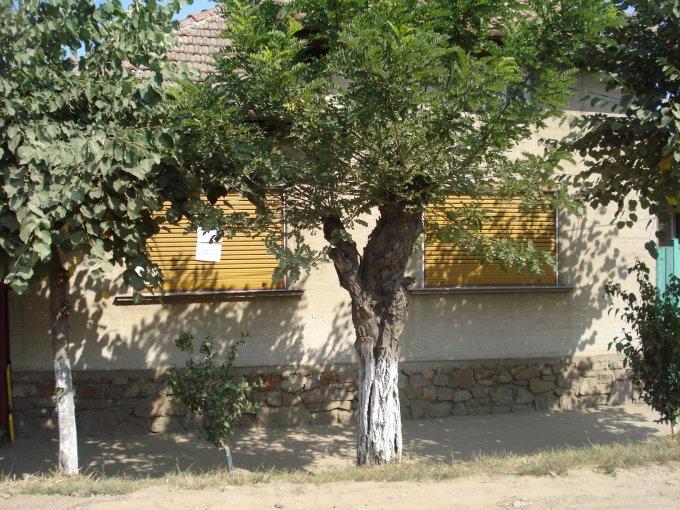 Casa de vanzare in Marghita cu 4 camere, cu 1 grup sanitar, suprafata utila 675 mp. Suprafata terenului 675 metri patrati, deschidere 10 metri. Pret: 42.000 euro negociabil. Casa