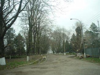 vanzare 3300 metri patrati teren intravilan, localitatea Varsatura
