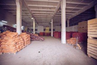 Spatiu industrial de vanzare, 13651 metri patrati utili, in Sud  Ghimbav  Brasov