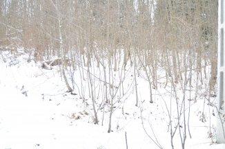 1000 mp teren intravilan de vanzare, in zona Centru, Predeal  Brasov