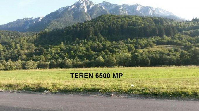 Teren intravilan vanzare 6500 mp, deschidere 52 metri. Pret: 143.000 euro. agentie imobiliara vand teren intravilan