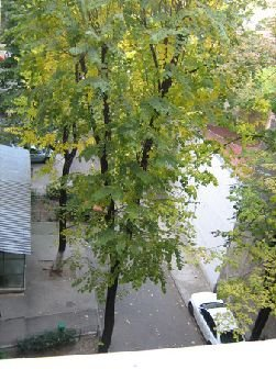 agentie imobiliara inchiriez Spatiu comercial 3 camere, 66 metri patrati, in zona Iancului, orasul Bucuresti