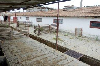 Ferma de vanzare cu 3034 mp teren, Poarta Alba Constanta
