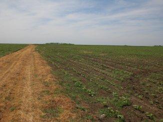 vanzare teren extravilan agricol de la agentie imobiliara cu suprafata de 800 mp, comuna Vama Veche