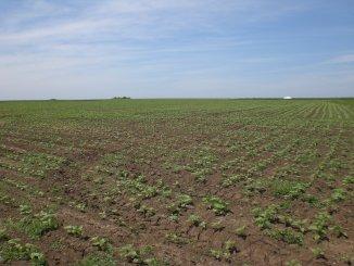 800 mp teren agricol de vanzare, in  Constanta Vama Veche