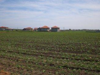 vanzare 800 metri patrati teren agricol extravilan, comuna Vama Veche