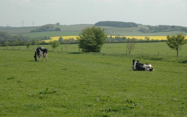 teren agricol vanzare de 1250000 metri patrati, extravilan. 5900 euro. Clasa fertilitate: 0. Destinatie: Ferma, Agricultura. Teren Crucea  Constanta