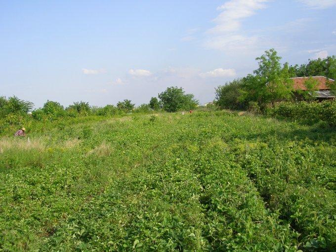 Teren intravilan de vanzare direct de la proprietar, in Giurgiu, zona Balanoaiei, cu  EUR. Suprafata de teren 400 metri patrati cu deschidere de 12 metri.  Destinatie: Rezidenta.