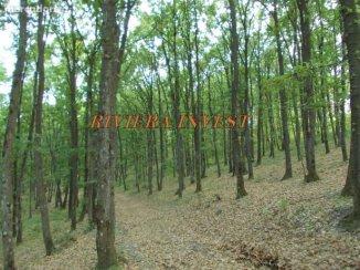 Turceni  Gorj padure de Foioase 20 hectare la pretul de  EUR