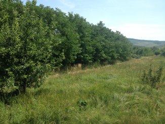 vanzare teren extravilan agricol de la proprietar cu suprafata de 5677 mp, orasul Iasi