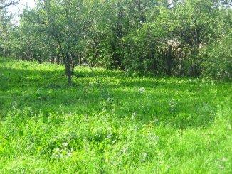 Ilfov Buftea, zona Nord, teren intravilan de vanzare de la proprietar