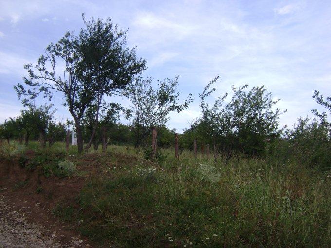 vanzare teren extravilan agricol de la agentie imobiliara cu suprafata de 10000 mp, comuna Paulesti