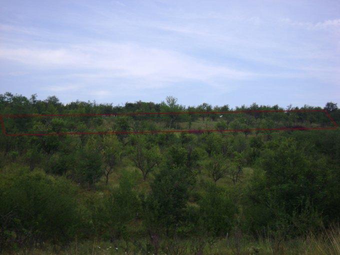 Prahova Paulesti, teren extravilan de vanzare de la agentie imobiliara