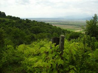 vanzare 1200 metri patrati teren agricol extravilan, comuna Cristian