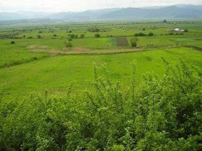 Teren agricol extravilan 12000 mp, deschidere 120 metri. Pret 40.000 euro. agentie imobiliara vand teren agricol. Destinatie: Hala productie, (mini) Hotel / Pensiune. Utilitati: Gaze, Curent electric 380V.