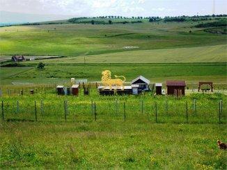 vanzare 956 metri patrati teren intravilan, comuna Sura Mare