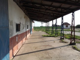 Timis Timisoara, ferma de vanzare de la proprietar